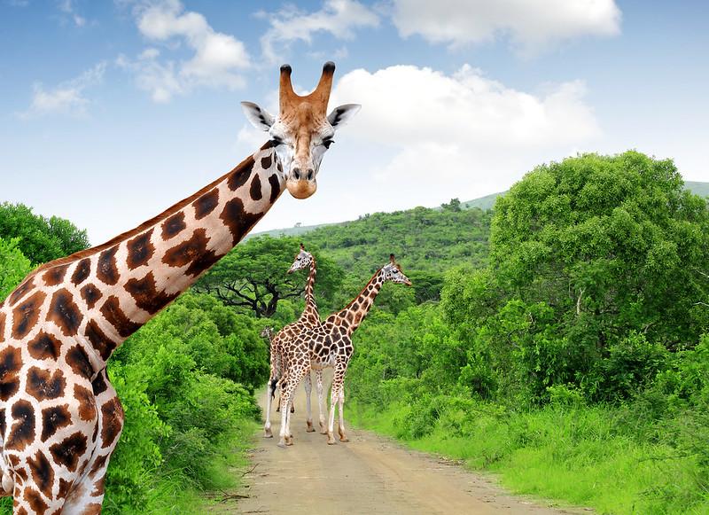 Afrika Safari – Abenteuerreise mit Löwen, Zebras & Co.