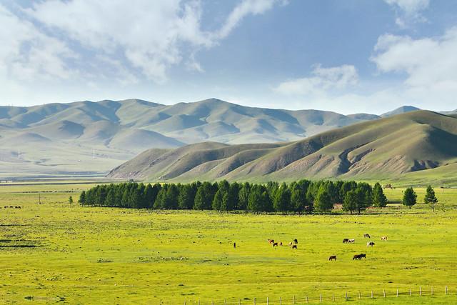 Kaschmir aus der Mongolei: Ein ganz besonderes Souvenir